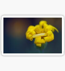 Soft focus of a yellow flower  Sticker