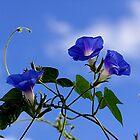 Blue Blue My World Is Blue by © Loree McComb