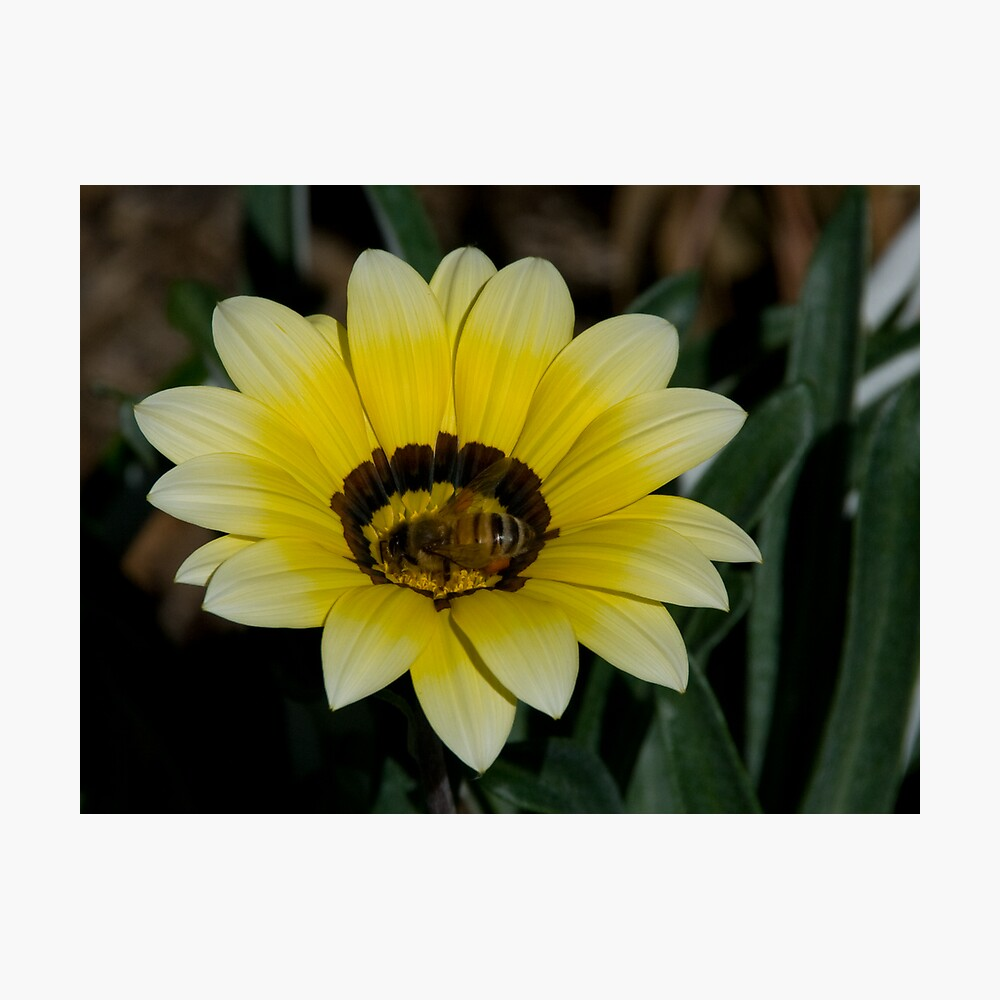 Bee Me Photographic Print