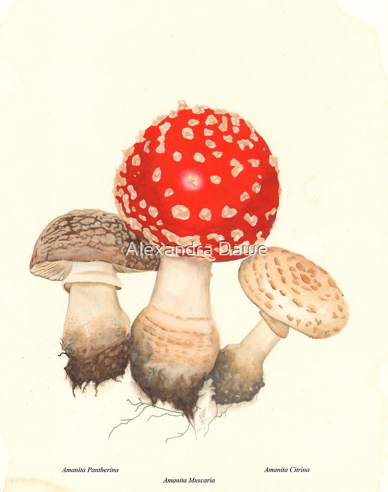Mushrooms by alexandradawe