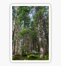 Coniferous trees stand on a green moss-covered ground Sticker
