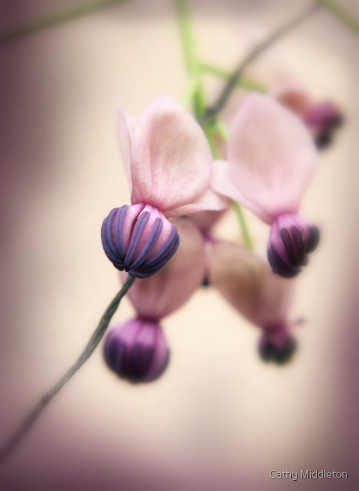 Buds by Cathy Middleton