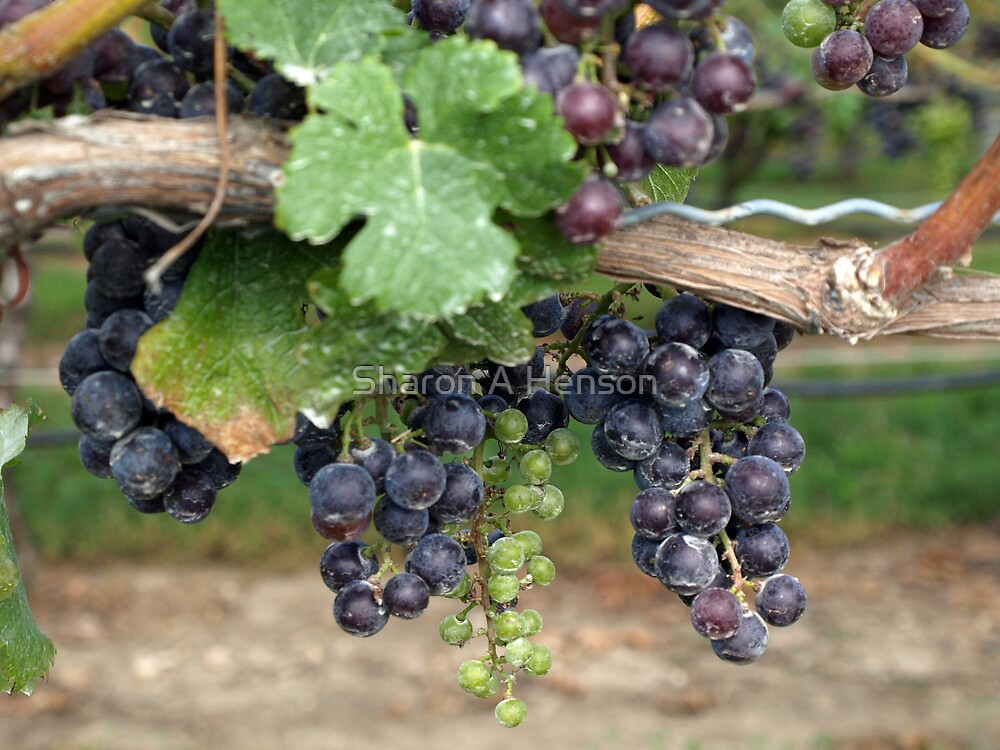 WINE ON THE VINE by Sharon A. Henson