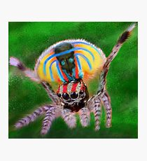Peacock Jumping Spider Photographic Print