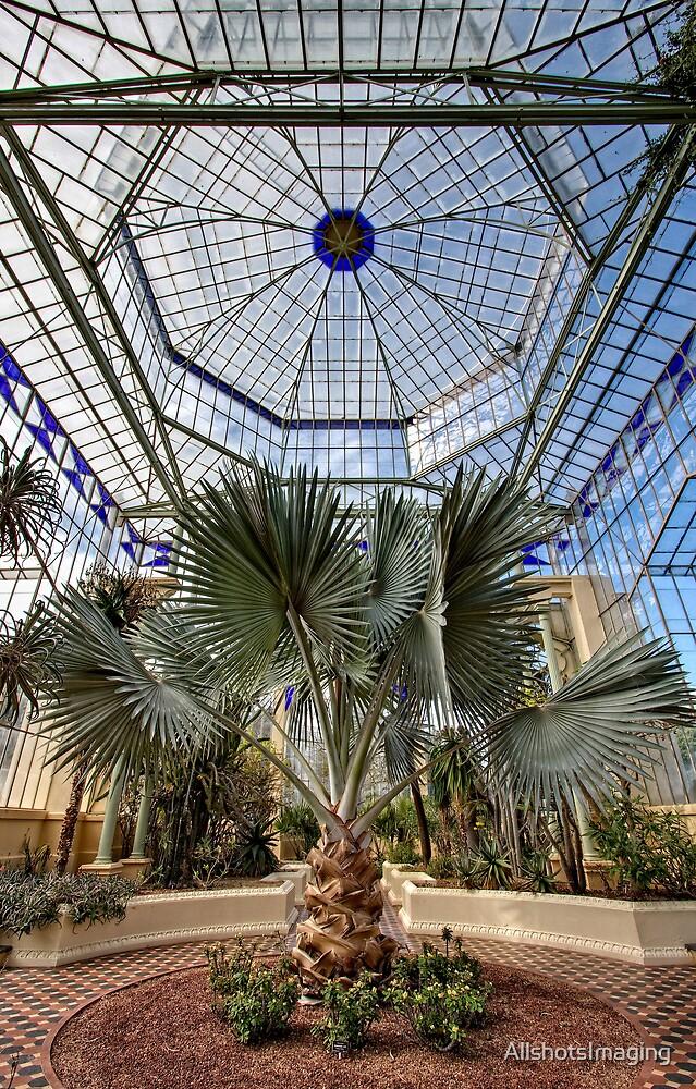 Old Greenhouse - Adelaide Botanic Gardens by AllshotsImaging