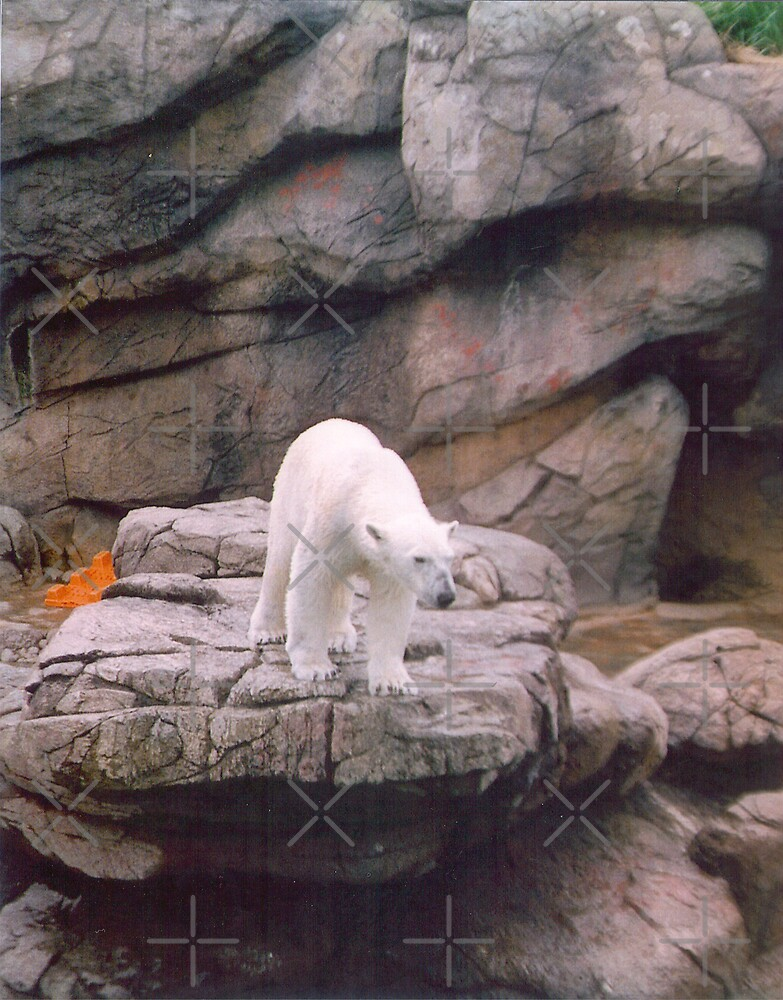 Polar Bear by Sheila Simpson
