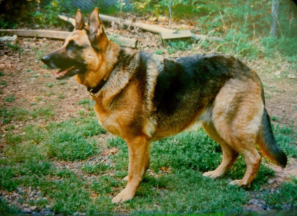 The Noble German Shepherd by Vivian Eagleson