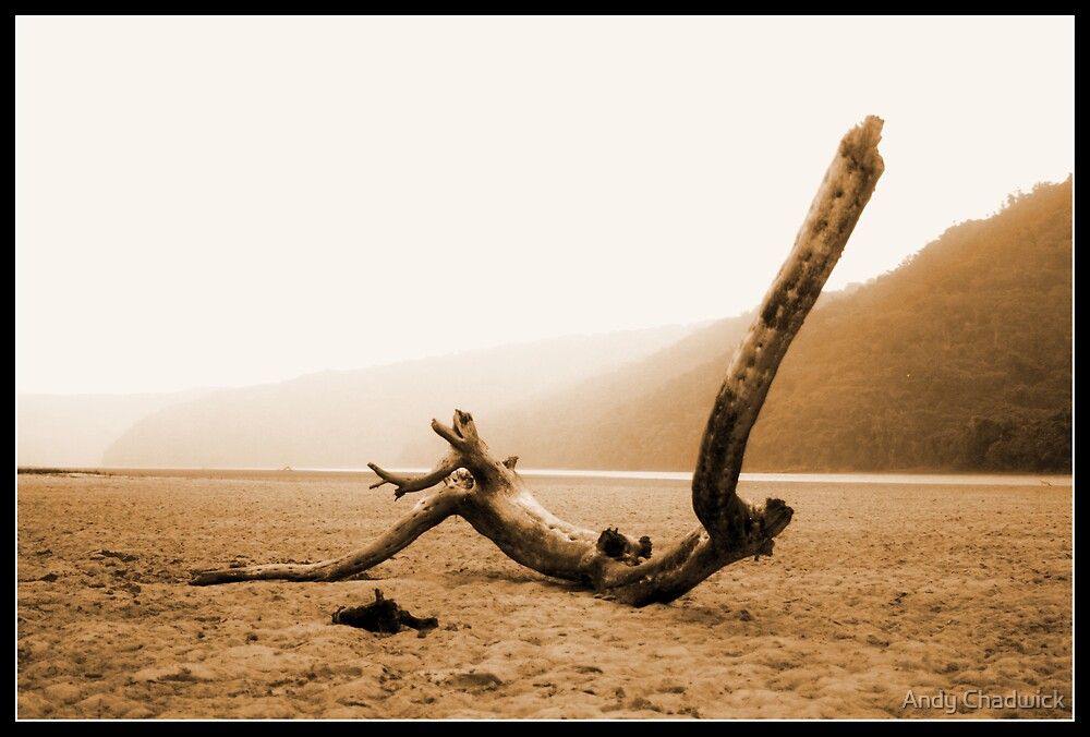Drift wood at Cefane Eastern Cape by Andy Chadwick