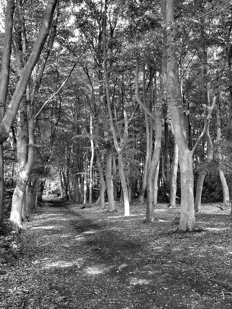 Woodlands by calam19