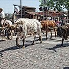 The Cattle Drive by Colleen Drew