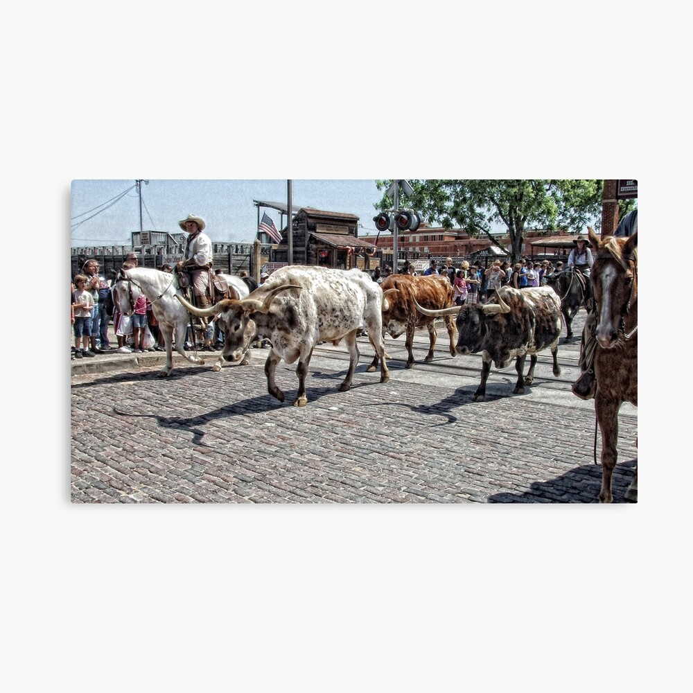 The Cattle Drive Canvas Print