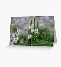 Sitka Burnet Greeting Card
