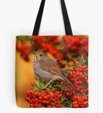 A Hermit Thrush Amid the Colors of Autumn Tote Bag