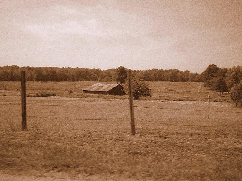 Fields by mtda