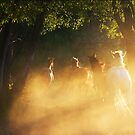 Dreaming with horses II. by Zoltan Madacsi