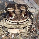 I'm Toadally Cool! by Glenna Walker