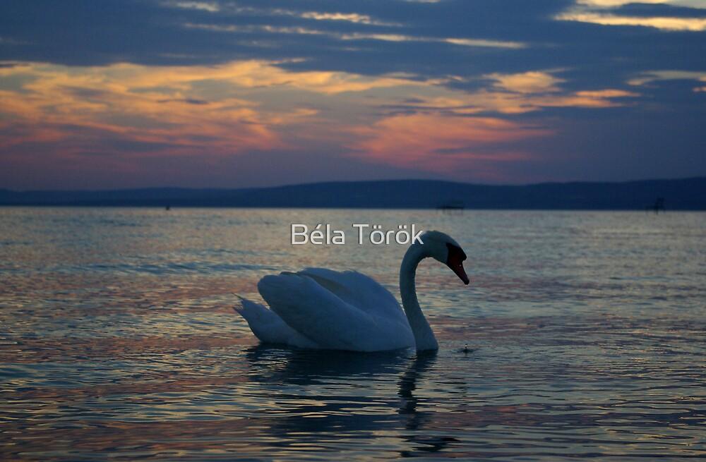 Swan by Béla Török
