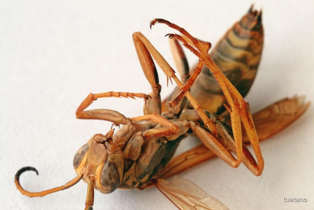 bug wars 1 by tuetano