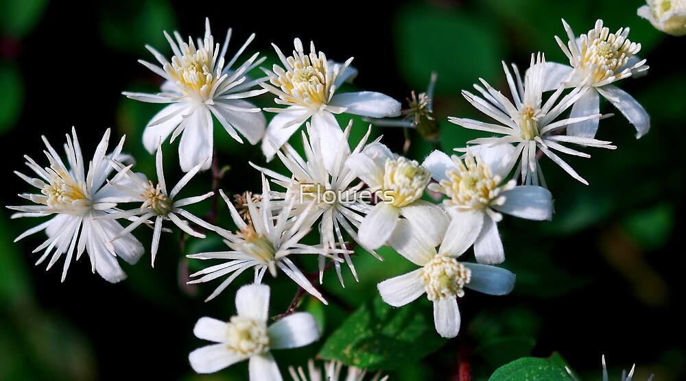 Little Stars by Flowers