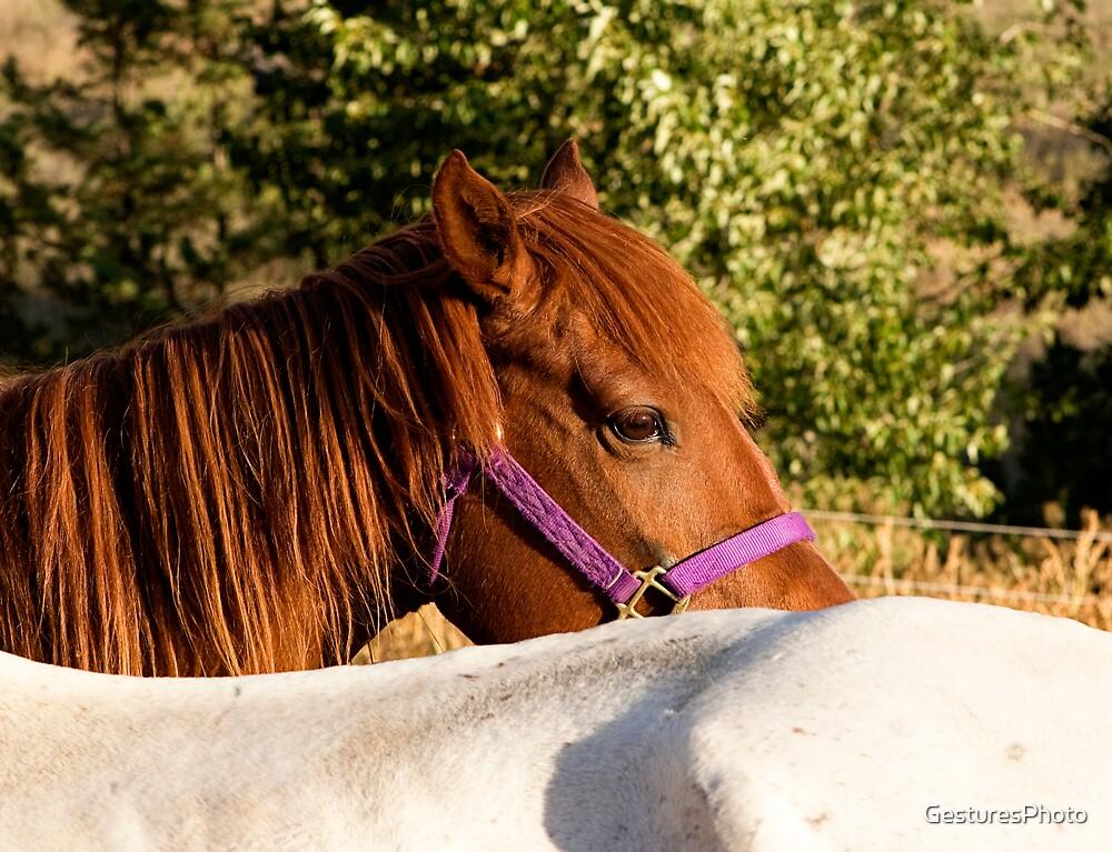 Horses by GesturesPhoto