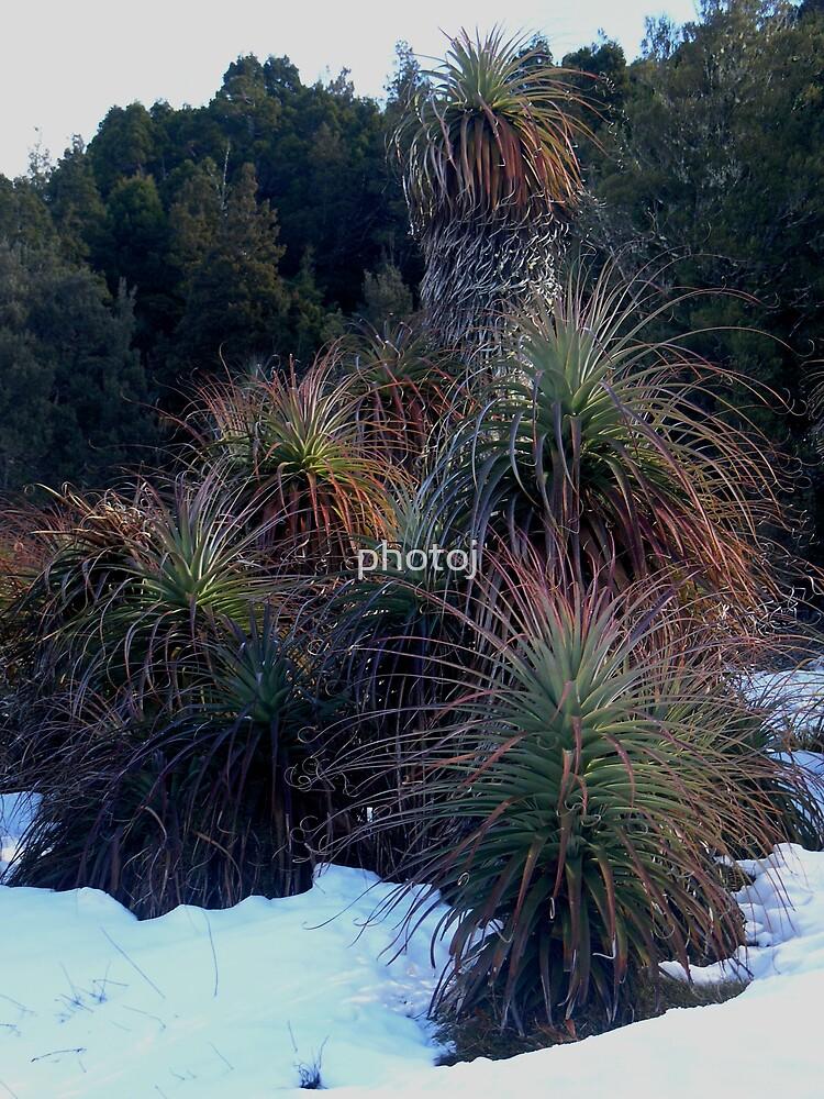 photoj Tasmania Winter by photoj