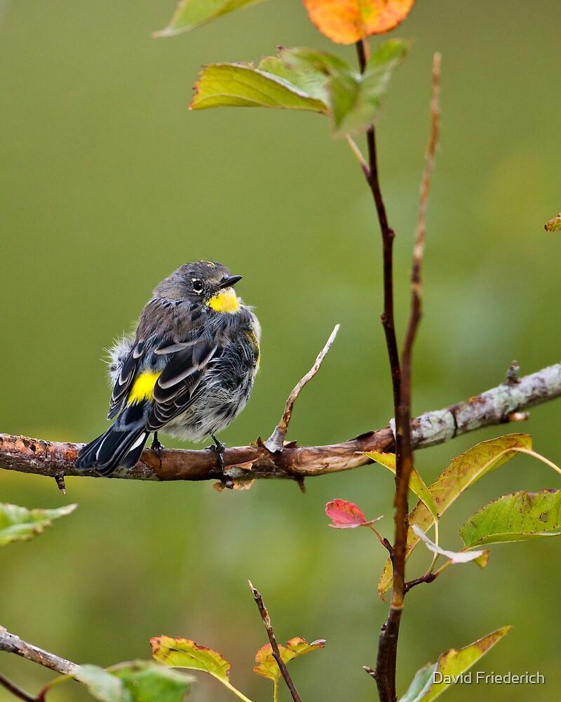 Small Bird: Big Charm by David Friederich