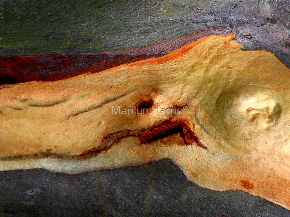 Gum Tree Abstract by Marilyn Harris