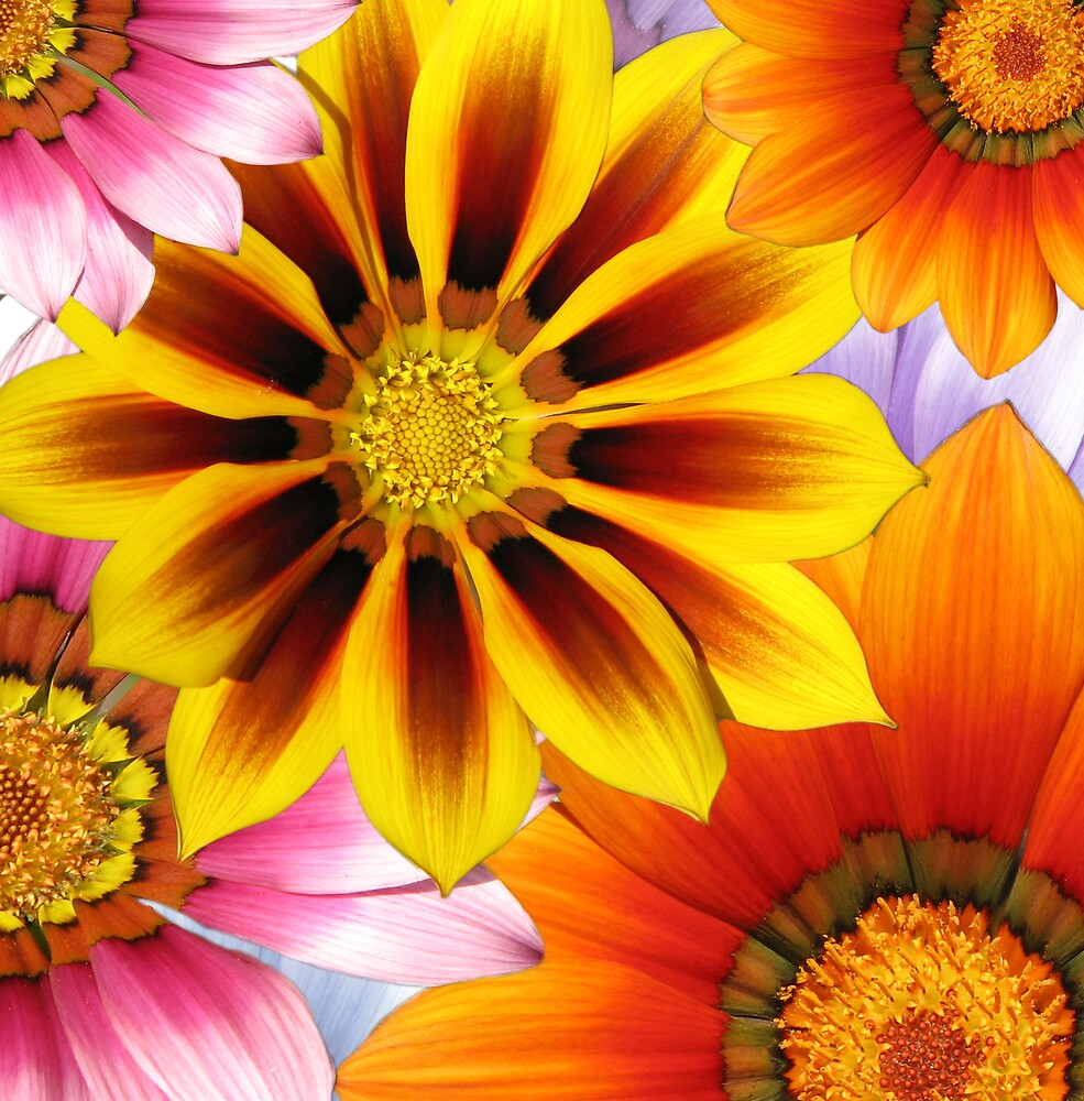 brighten your day! by Alison Johnson