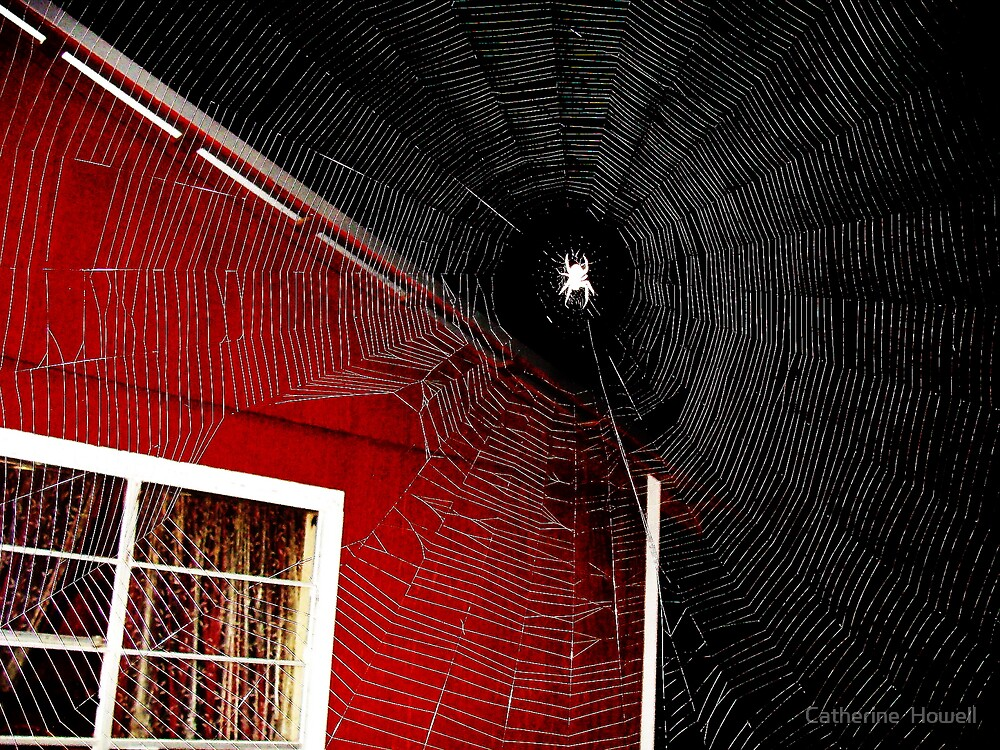 Night Spider At The Camphouse by Catherine  Howell