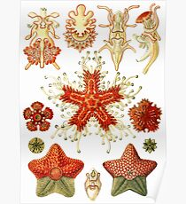 Asteridea - Art Forms of Nature Poster