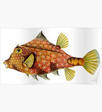 Fish - Art Forms of Nature Poster