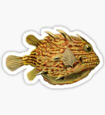 Small Fish - Art Forms of Nature Sticker