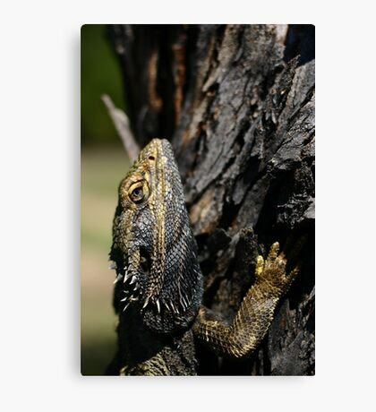 Bush Dragon Canvas Print