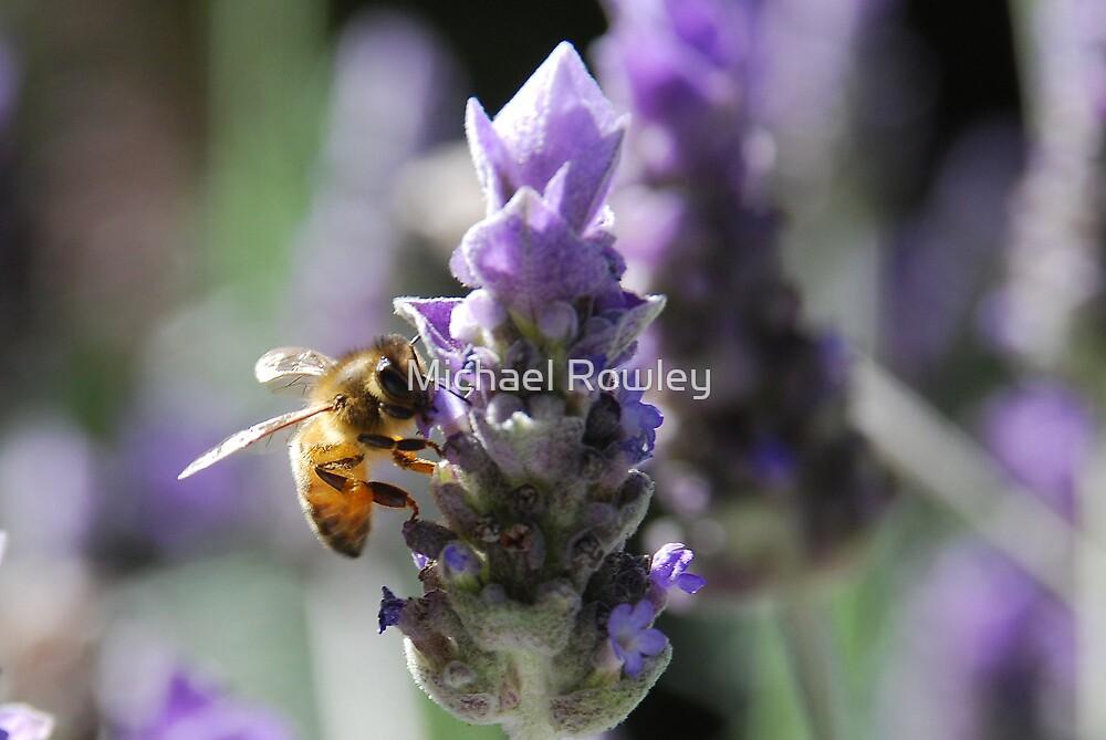 Lavender Bee by Michael Rowley
