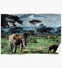 Elephantsins a africa grass field Poster
