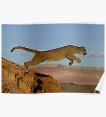 Mountain lion cougar jumping across two mountains Poster