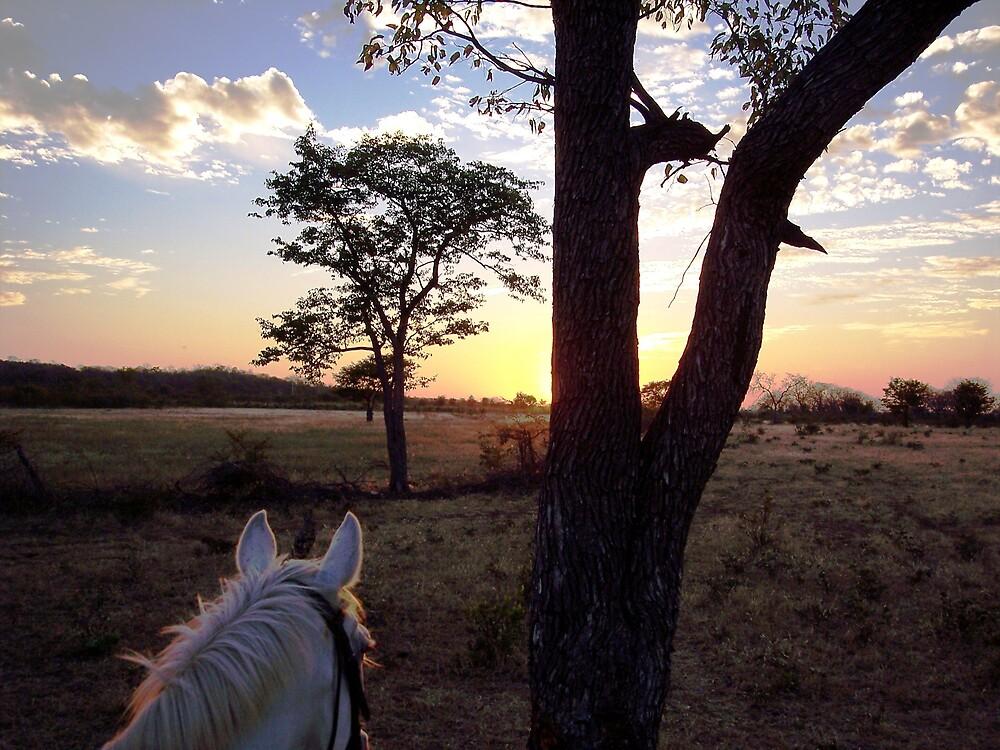 Sunset ride by Braedene