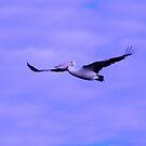 DAWN FLIGHT by Rocksygal52