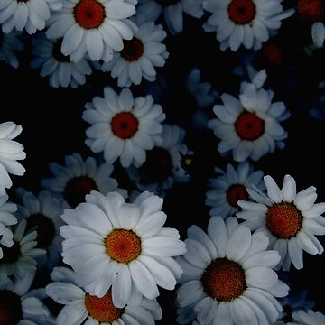 Deeply Daisies by Crokuslabel