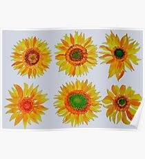 Sun flower hand painted pattern Poster