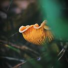 Chanterelle by Alex Volkoff
