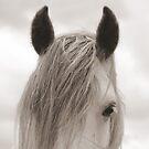 Dales pony ears by Mitch  McFarlane