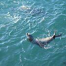 Sea Lion Basking by Snowkitten