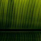 Leaf by Ed Stone