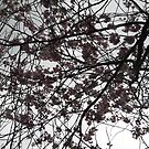 Cherry Blossoms on a Dublin Sky by Snowkitten