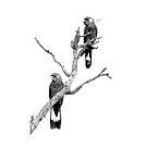 Black Cockatoo Pair by Coralie Plozza