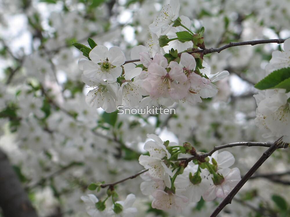 Blossoms by Snowkitten