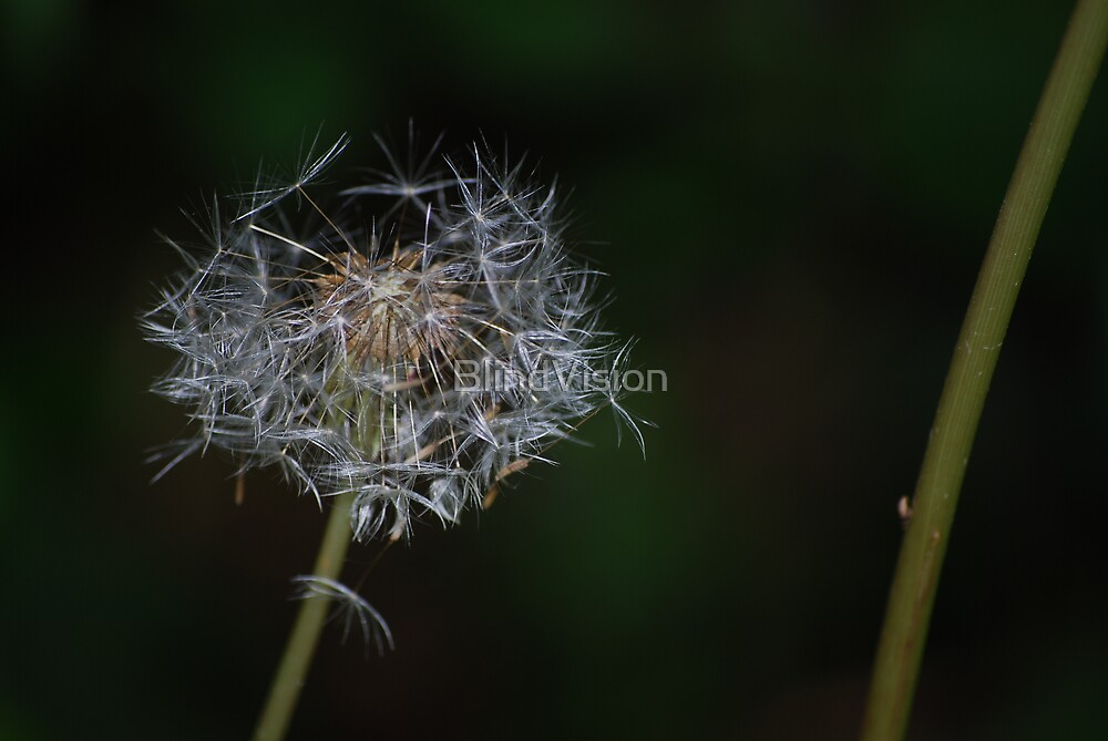 Make a wish by BlindVision