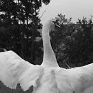 Opened Wings by Gemma27