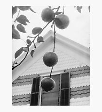 Gable and Apples by Alfred Stieglitz, 1922 Photographic Print